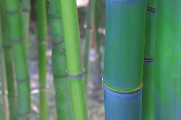Bamboo green forest, bamboo stem close up, asian nature