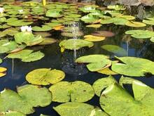 Solar Springbrunnen Im Teich
