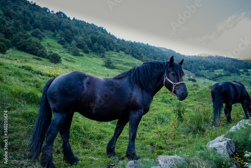 horse portrait in the andorran pyrenees Canvas Print