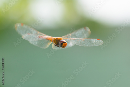 Photo dragonfly on a mid air .