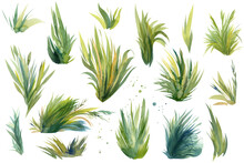 Set Of Watercolor Drawings Of Grass On A White Background, Watercolor Illustration,