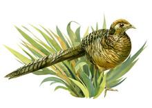 Composition With A Bird, A Ph...