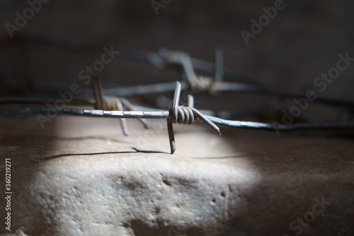 An ancient barbed wire as a symbol of imprisonment and repression Canvas Print