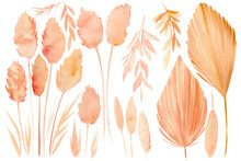 Set Of Drawings Of Dry Plants,...