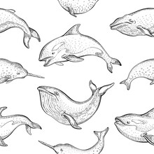 Whales Pattern. Vector Seamless Background With Blue Whale, Narwhal, Orca Killer. Cute Sea Animal Illustration. Cartoon Marine Ocean Drawing. Outline Silhouette Print, Wallpaper Art, Textile Design