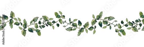Cuadros en Lienzo Seamless border of green melissa officinalis twigs, isolated on white