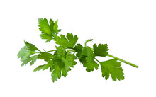 Aromatic Fresh Green Parsley I...