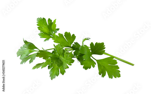 Fototapeta Aromatic fresh green parsley isolated on white obraz