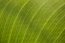 Macro Shot Of Fresh Green Leaf