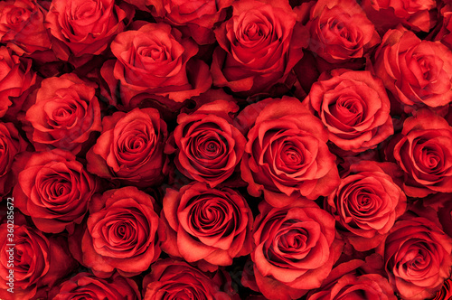 Big bunch of fresh red roses in bouquet close up texture background  #360285672