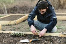 A Man Planting Seedlings In Ea...