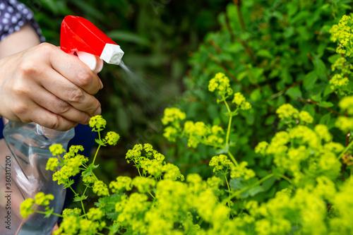 Fotografía Flowers care and tending garden growth