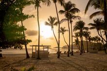 Sunset Through Palm Trees On B...