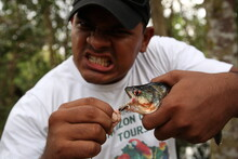Wild Piranha Fish Caught By A ...