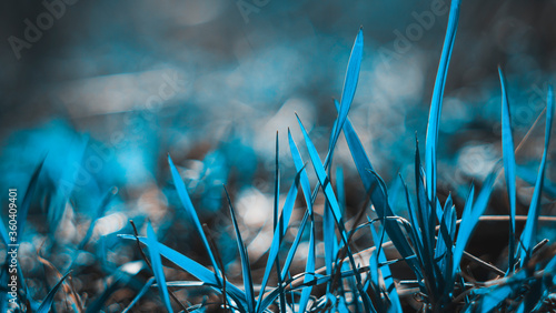 Photo Fresh grass close up with bokeh in spring