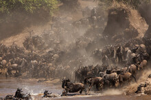 The Great Migration Of Wildebe...