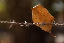 Closeup Shot Of A Brown Leaf O...