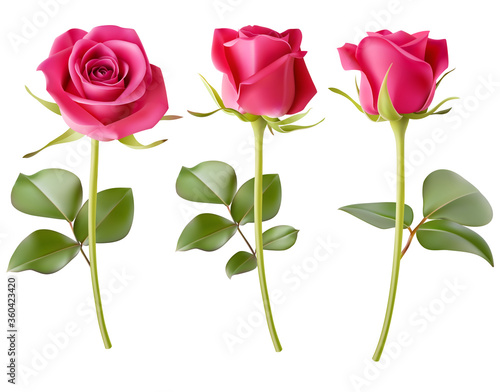 Set of decorative realistic pink rose with green leaves isolated on white Fototapeta