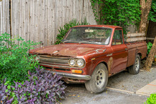 Red Datsun 1300 Car Code Number 620, Produced In Early 1972 In Japan. Have Been Imported To Sell In Thailand It Is An Old Rusted Car That Is Displayed In A Retro-looking Garden.