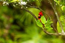 Closeup Shot Of A Northern Cardinal Bird On The Tree Branch