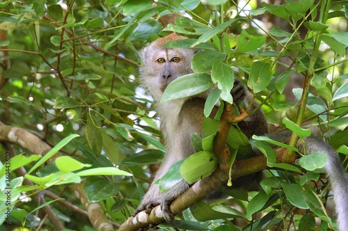Shot of an adorable brown-haired monkey sitting on the tree branches Wallpaper Mural