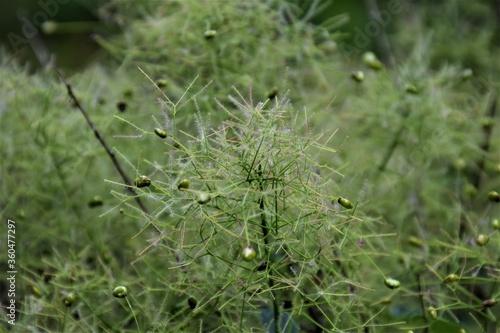 Fototapeta Zielony kwiat  obraz