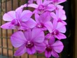 Leinwandbild Motiv Orchid flower in garden at winter or spring day for postcard beauty and agriculture object  purple flower