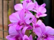 canvas print picture - Orchid flower in garden at winter or spring day for postcard beauty and agriculture object  purple flower