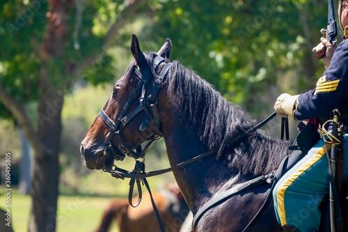 Fototapeta horse and rider at an American Civil War Reenactment