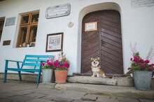 Welsh Corgi Pembroke Dog Smiling In Front Of The Stylish House In A Village, Sitting And Waiting