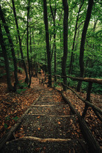 Landscape Photo Of Wooden Stai...