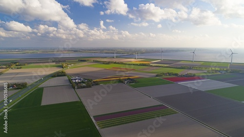 Aerial  view of colorful tulip-fields during springtime in the Netherlands