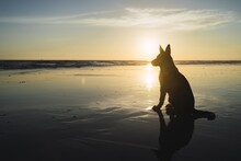 Silhouette Of A Big Dog Sittin...