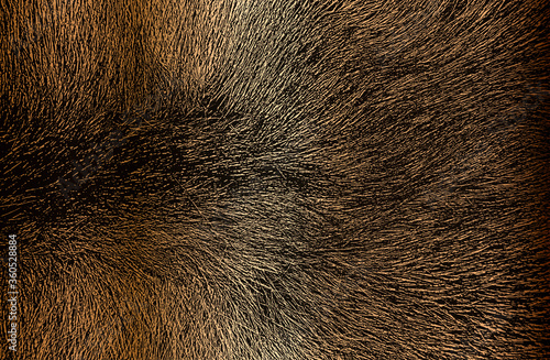 Fényképezés Distressed overlay texture of golden natural fur, grunge vector background