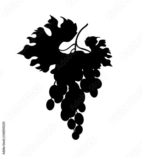 Fotomural The silhouette of a bunch of black grapes