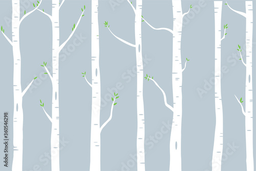 Fotografie, Obraz woods of birch trees with green leaves illustration