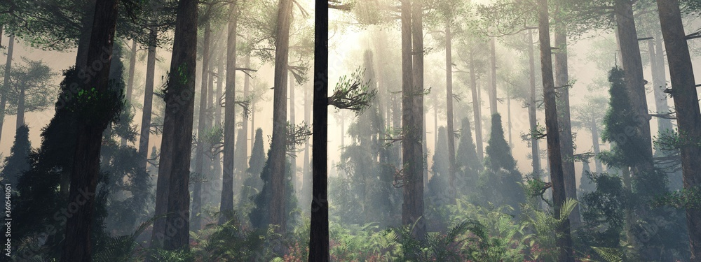 Fototapeta Forest in the fog, morning in the forest, trees in the haze, rays among the trees,
