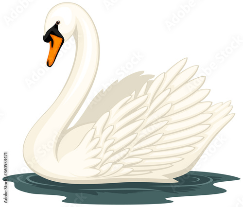 Cuadros en Lienzo Vector illustration of a swan in water, against a white background
