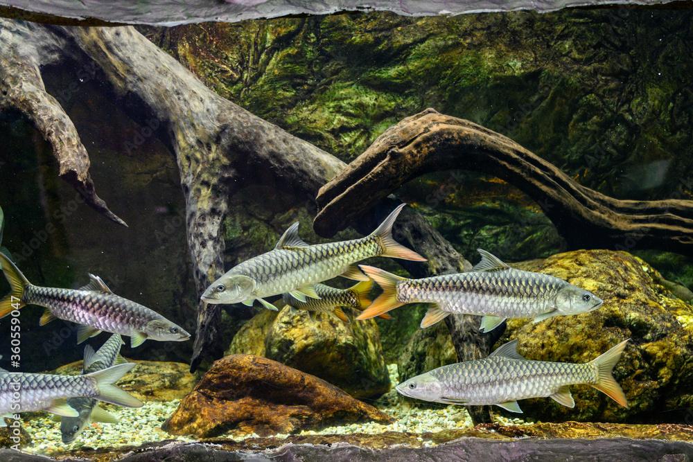 Big fish in a big aquarium.