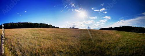 Fotografie, Obraz Panorama view of a cornfield in germany