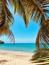 Palm Tree Fronds Showcasing Vi...