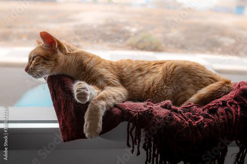 gato atigrado de color marron acostado sobre una manta roja junto a la ventana, Canvas-taulu