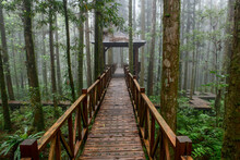 Wooden Stairs And Pathway Thro...