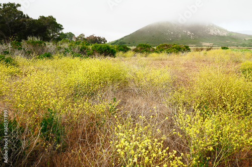 The Marina Peninsula Trail at Morro Bay State Park Goes Through the Estuary and an Elfin Forest near the Harbor, California Coastline, Los Osos
