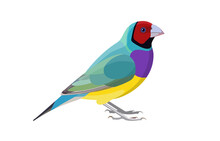 Finch Bird Vector Illustration...