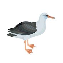 Albatross Bird Vector Illustra...