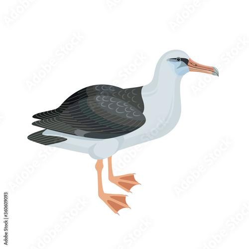 Valokuva Albatross bird vector illustration. Side view.