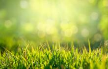 Green Grass In The Golden Sun ...