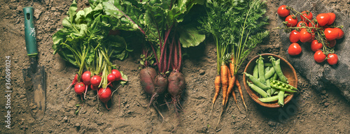 Fresh vegetables, peas, radish, tomato, carrot, beetroot on ground on farm at sunset. Freshly bunch harvest. Healthy organic food, agriculture, top view