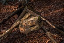 Large Size Of Ant Made Of Wood In Botanical Park Arboretum
